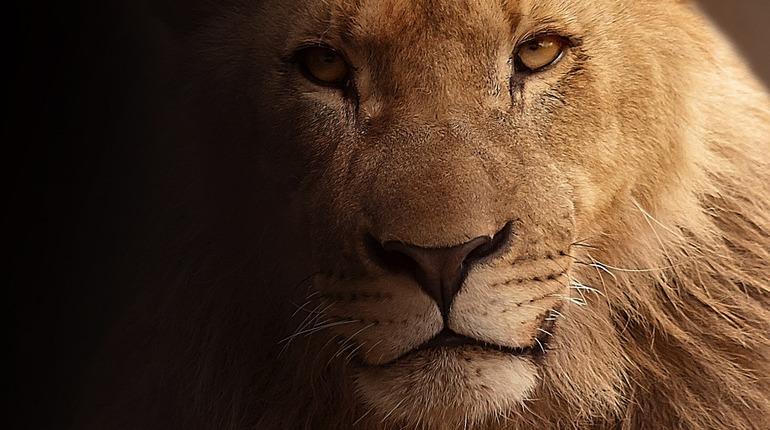 Лев расцарапал ребенка в приморском зоопарке