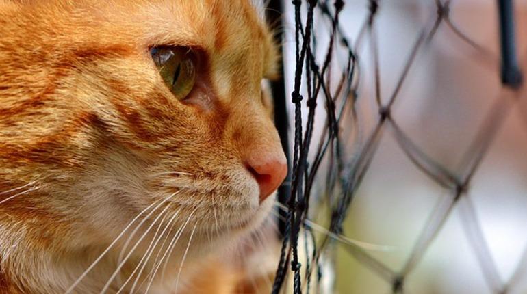 Петербургские рыжеватые коты ищут хозяев наДень защитника Отечества
