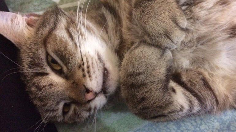 Голландский инженер создал программу для распознания соседского кота