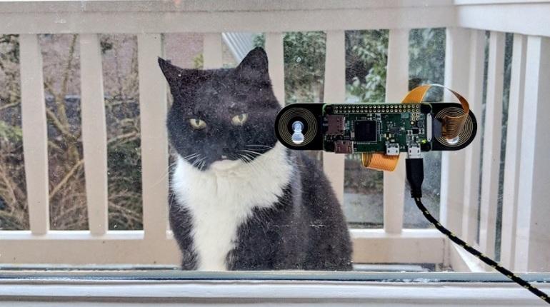Инженер запустил систему распознавания кошачьих мордочек