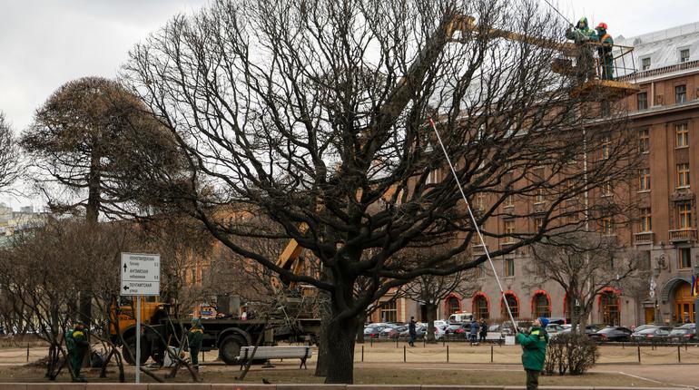 После зимней спячки городские растения примут освежающий душ. Активисты города проследят за исполнением обязательств по помывке деревьев.