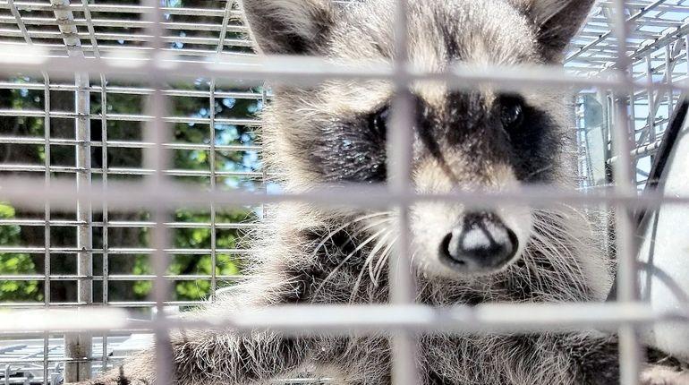 Руслан Бородин: концепцию законопроекта по контактным зоопаркам оцениваю положительно