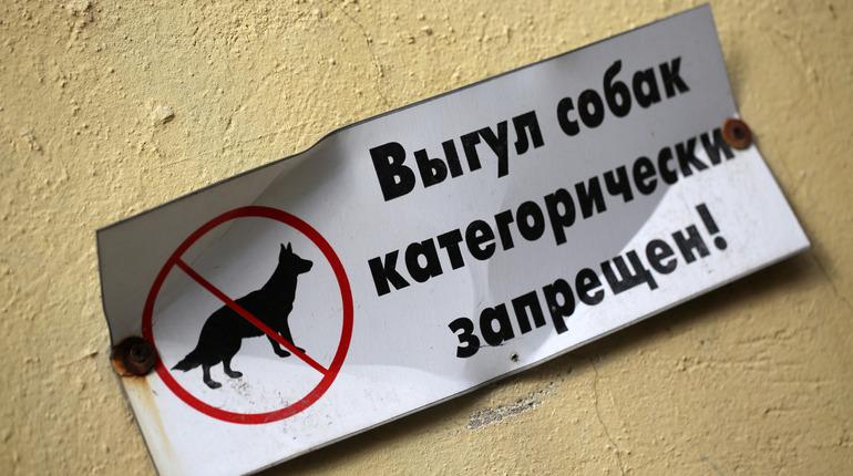 В Законодательном собрании Петербурга обсудили вопрос о выгуле собак в городе. В частности, обратили внимание на дефицит специальных площадок, где бы владельцы домашних животных могли на законных основания находиться вместе с питомцами.