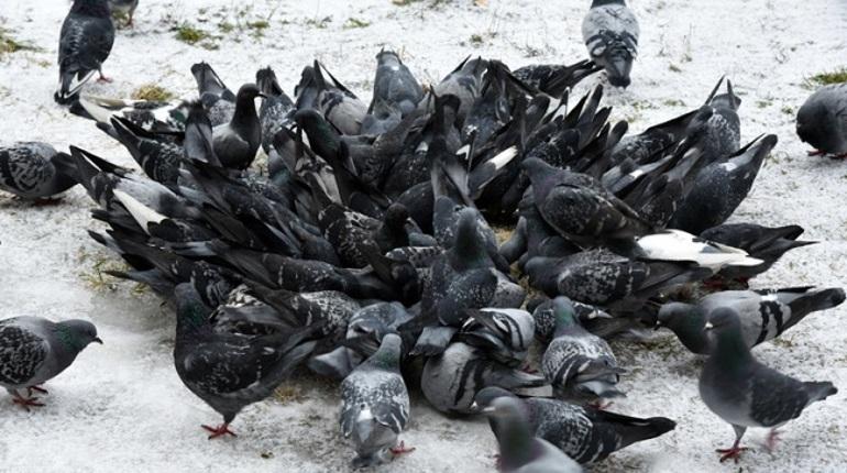 Весна пришла! Перелетные птицы возвращаются вПетербург