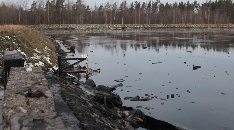 Полтавченко: «Красный бор» экологически безопасен