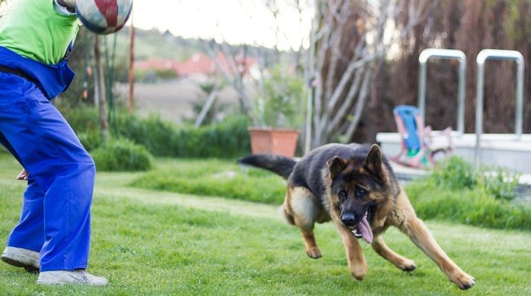 Как учат служебных собак