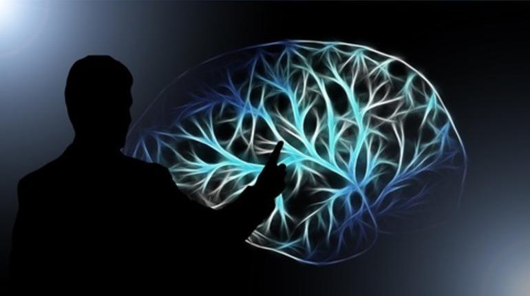 Ученые заставили мозг работать вне тела