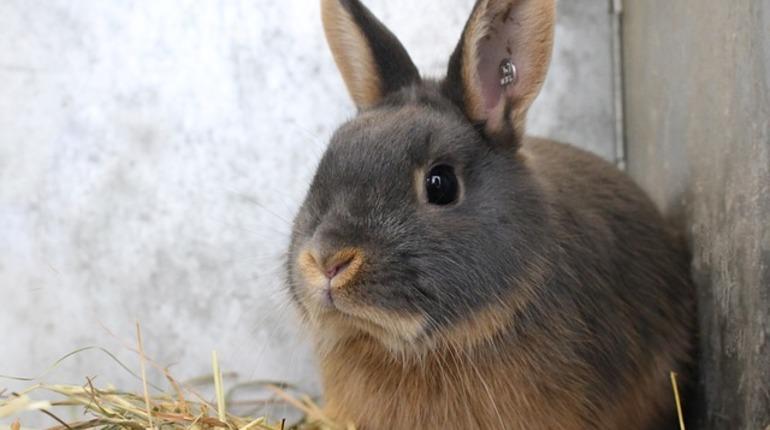Женщины порезали мужчину в Ленобласти из-за кролика