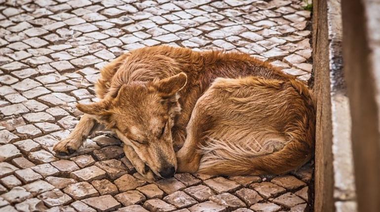 Рублевский заявил, что в Петербурге не обижают бездомных собак из-за ЧМ