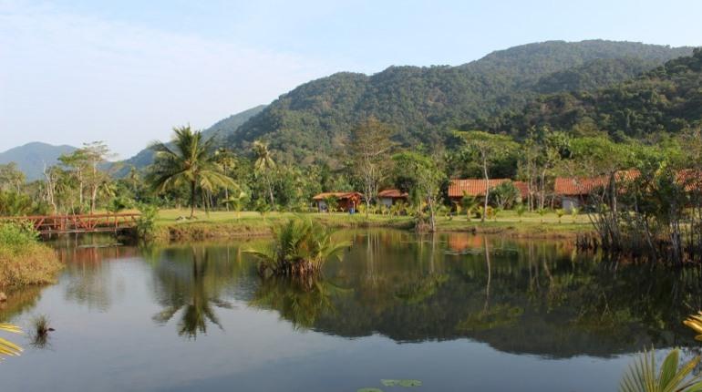 Тропические леса Амазонки могут пропасть