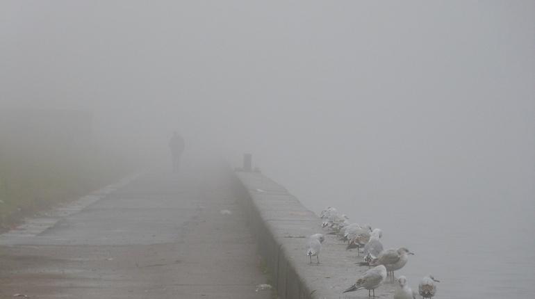 В Петербурге ливень и ветер сменит туман
