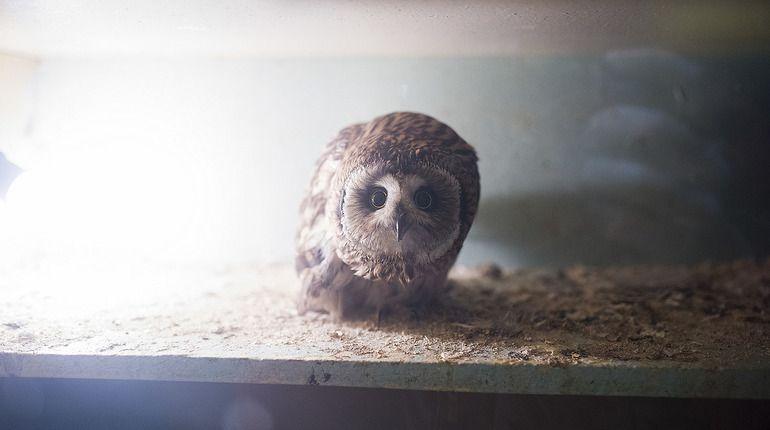 Животный эксперимент: зоозащитница полгода провела в контактном зоопарке