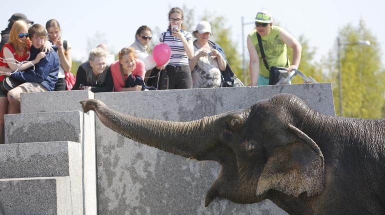 Зоозащитники не пускают слонов на Невский проспект