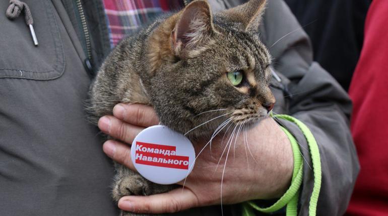 В Петербурге на несогласованную акцию вышел кот-оппозиционер