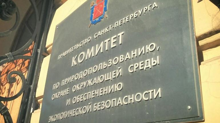 В Петербурге разработают концепцию экологического воспитания детей