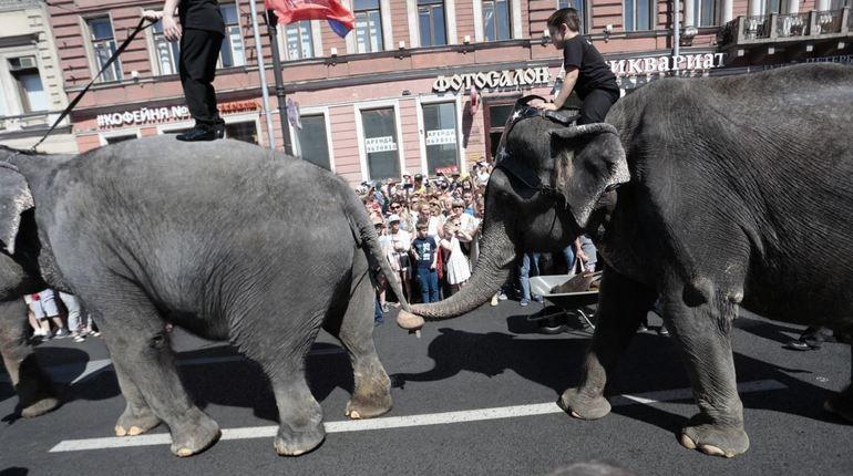 Петербургские активисты вышли с пикетами против эксплуатации слонов