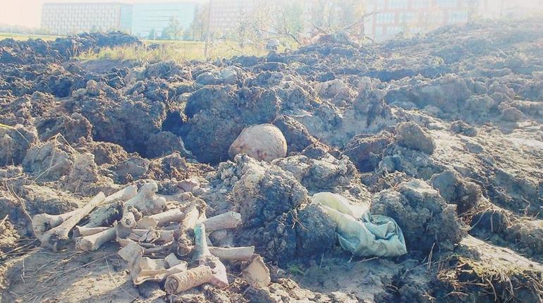 Строительство «дороги на костях» в Шушарах остановили