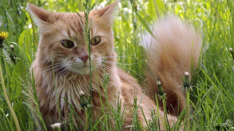 Кошки породистые и беспородные: как менялся кошачий рынок