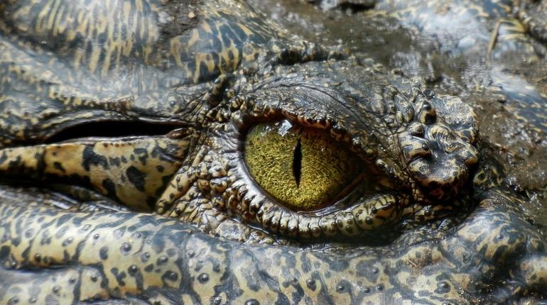 В Эфиопии крокодил съел священника во время крещения