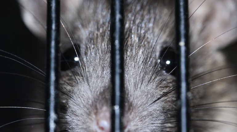 Владелец «Шавермы» на Рубинштейна палил по крысам из травмата