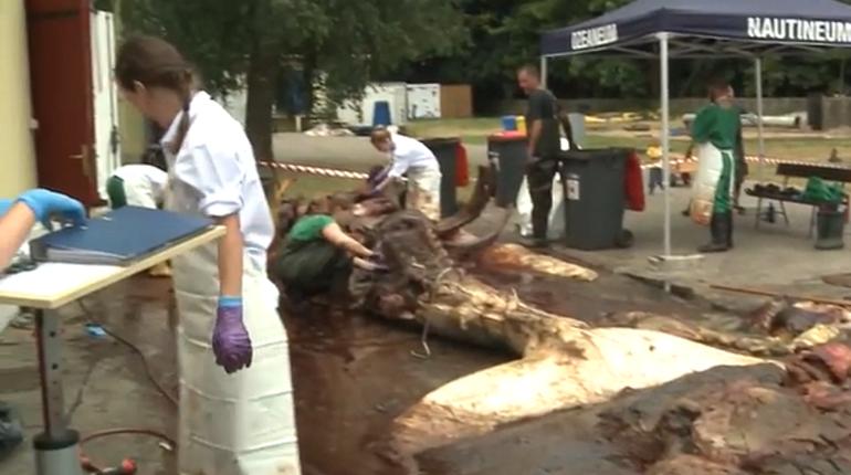 Найденный в водах Германии мертвый гигант не является китом из Ленобласти