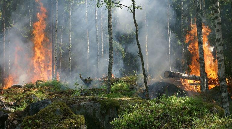 С завтрашнего дня гражданам запрещается посещать леса в Выборгском районе Ленинградской области, потому что в этой зоне повысился класс пожарной опасности.