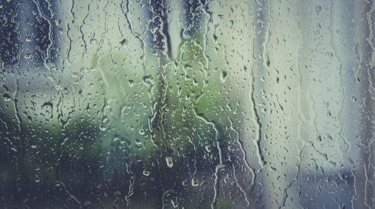 В ближайшие семь дней петербуржцев и гостей Северной столицы ожидает теплая летняя погода, но без дождей не обойдется, хотя жители города уже привыкли к этому.