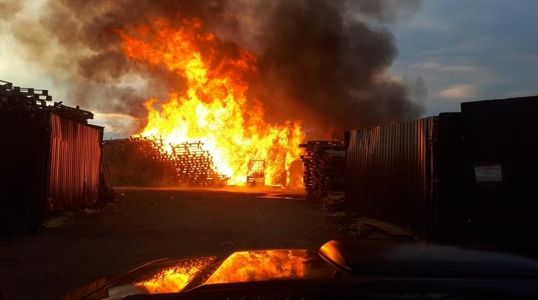 Очевидцы происшествия выложили в соцсеть кадры крупного пожара в деревне Новосергиевка Ленинградской области.