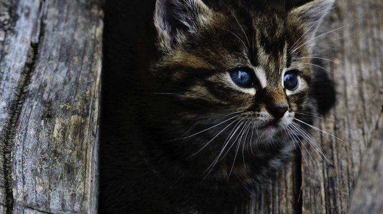 Кошки спасают детей от астмы
