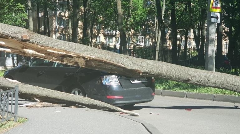 После недавнего усиления ветра, когда по всему Петербургу десятками падали деревья, горожане боятся, что следующее дерево упадет на них.