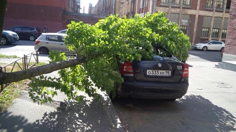 В Петербурге приготовились убирать поваленные ветром деревья