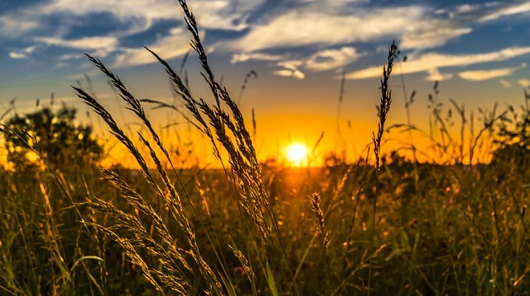 В Петербурге хотят брать плату за перевод сельхозземель под застройку