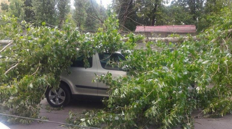 Ураган в Петербурге сломал еще несколько деревьев и сдул светофор