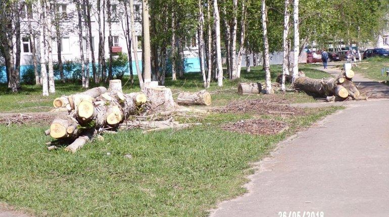 В Красносельском районе хотели «благоустроить» район, вырубив более 60 деревьев