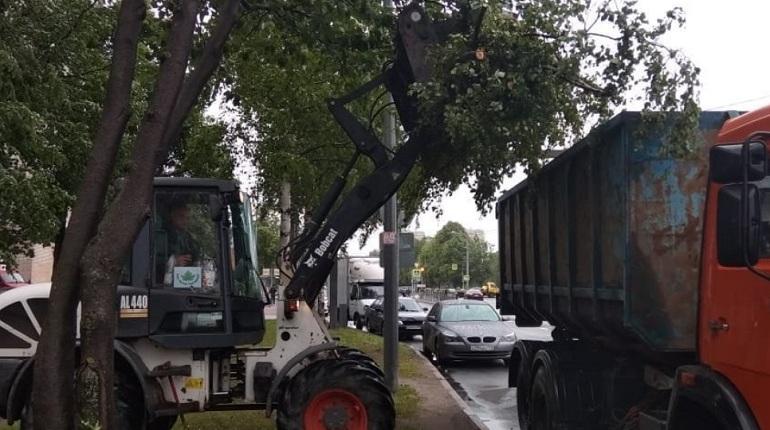 Ветер повалил больше всего деревьев на севере Петербурга