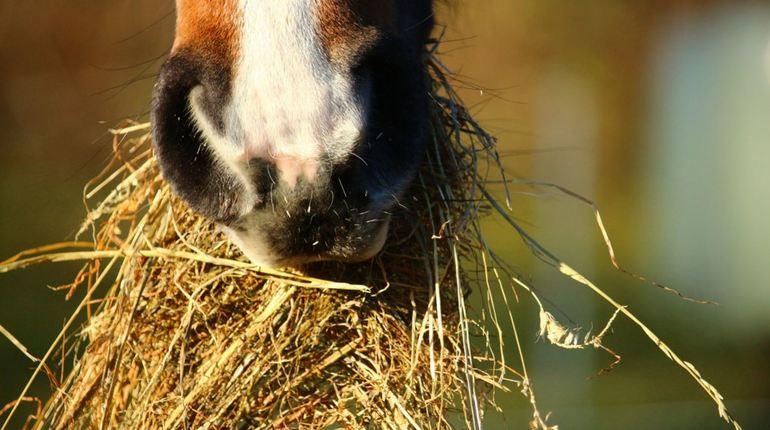 Аграрии Ленобласти уверены, что сена хватит для всех