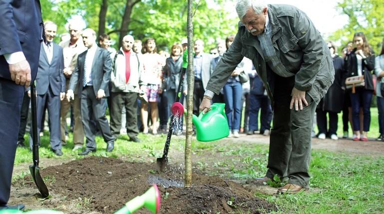 Власти защитят петербуржцев от смертельного дыхания деревьев