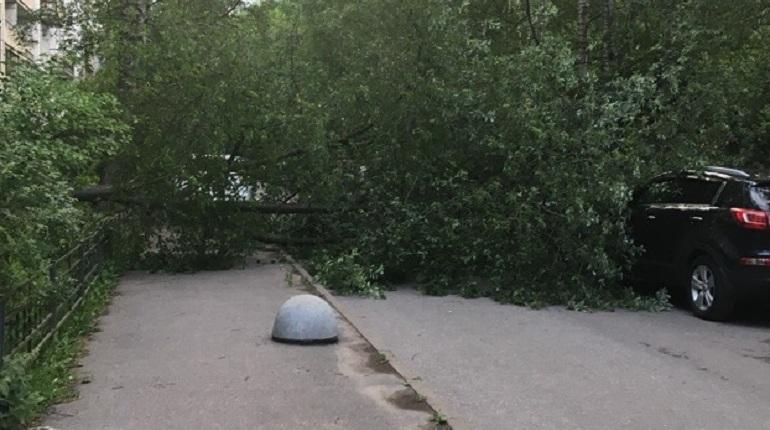 На Наличной улице дерево разбило две машины