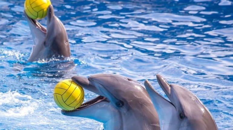 Родившийся в Петербурге дельфин Куплет впервые выступит в шоу