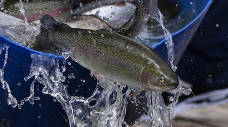 В Ленобласти активно развивается рыболовствои рыбопроизводство