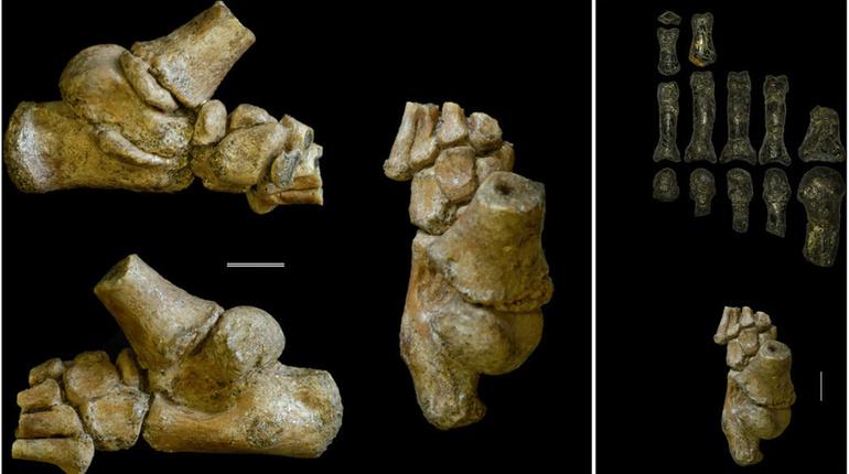 Ученые выяснили, как жили дети древнейших людей