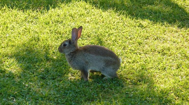 Музей-заповедник «Павловск» подвергся нападению зайцев