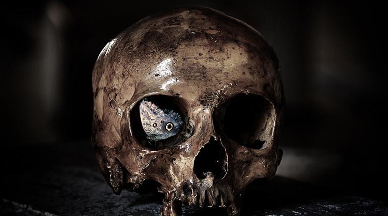 В поселке Романовка нашли скелет в бордовой футболке