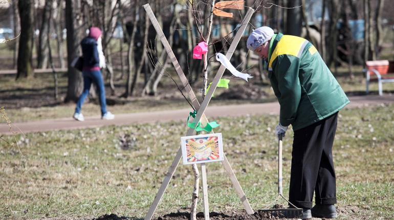Петербург озеленят на 1,5 тысячи гектаров