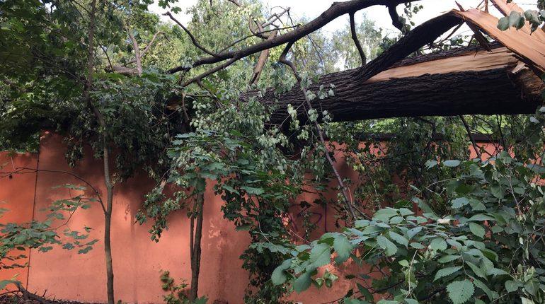 Обещанная петербуржцам оперативная уборка поваленных деревьев на практике столкнулась с бюрократической волокитой. Местами следы шквального ветра лежат неубранные по несколько недель, а заниматься ими власти начинают только после вмешательства