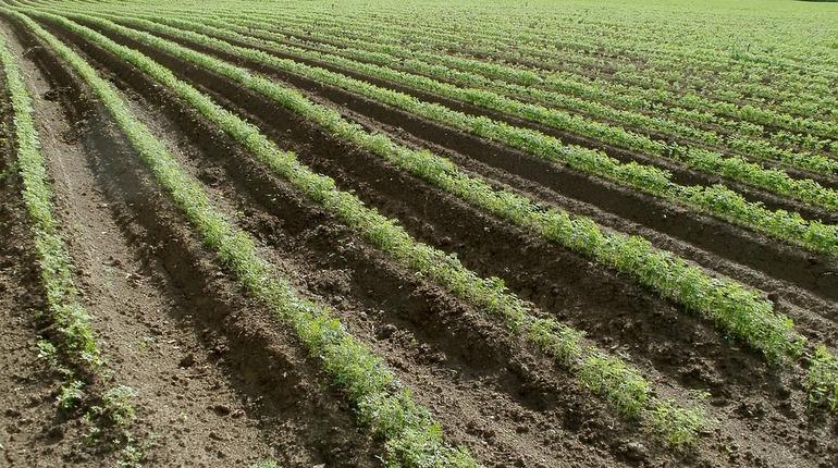 Дрозденко готовится осенью раздавать «ленинградские гектары»