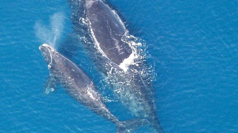 Китов в Средиземном море истребили римляне