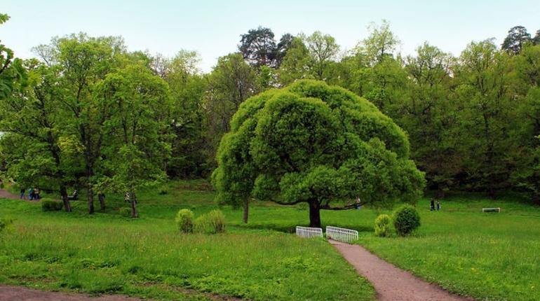 С «Леэненерго» взыскали 3,8 млн за ущерб деревьям и газонам