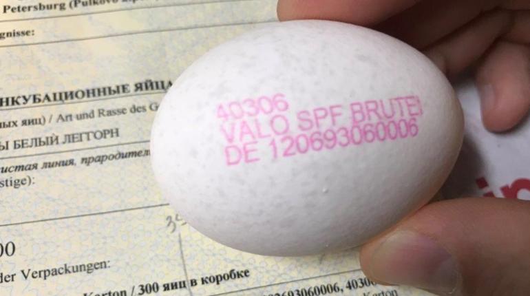 В «Пулково» задержали инкубационные яйца из Германии
