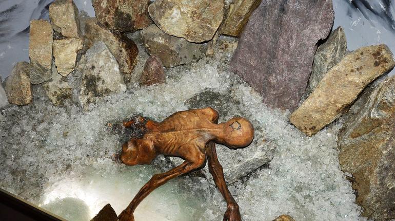 Ученые изучили меню последнего обеда древнего охотника Отци (Ötzi the iceman). Его часто называют альпийским или ледяным человеком.